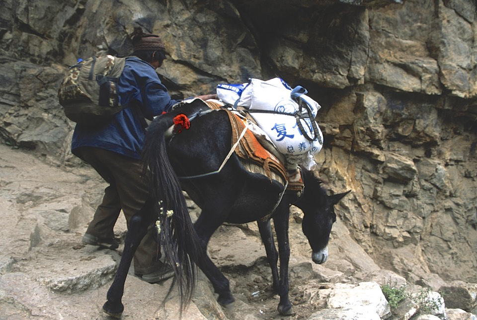 Navigating steep trails can be difficult for the mules