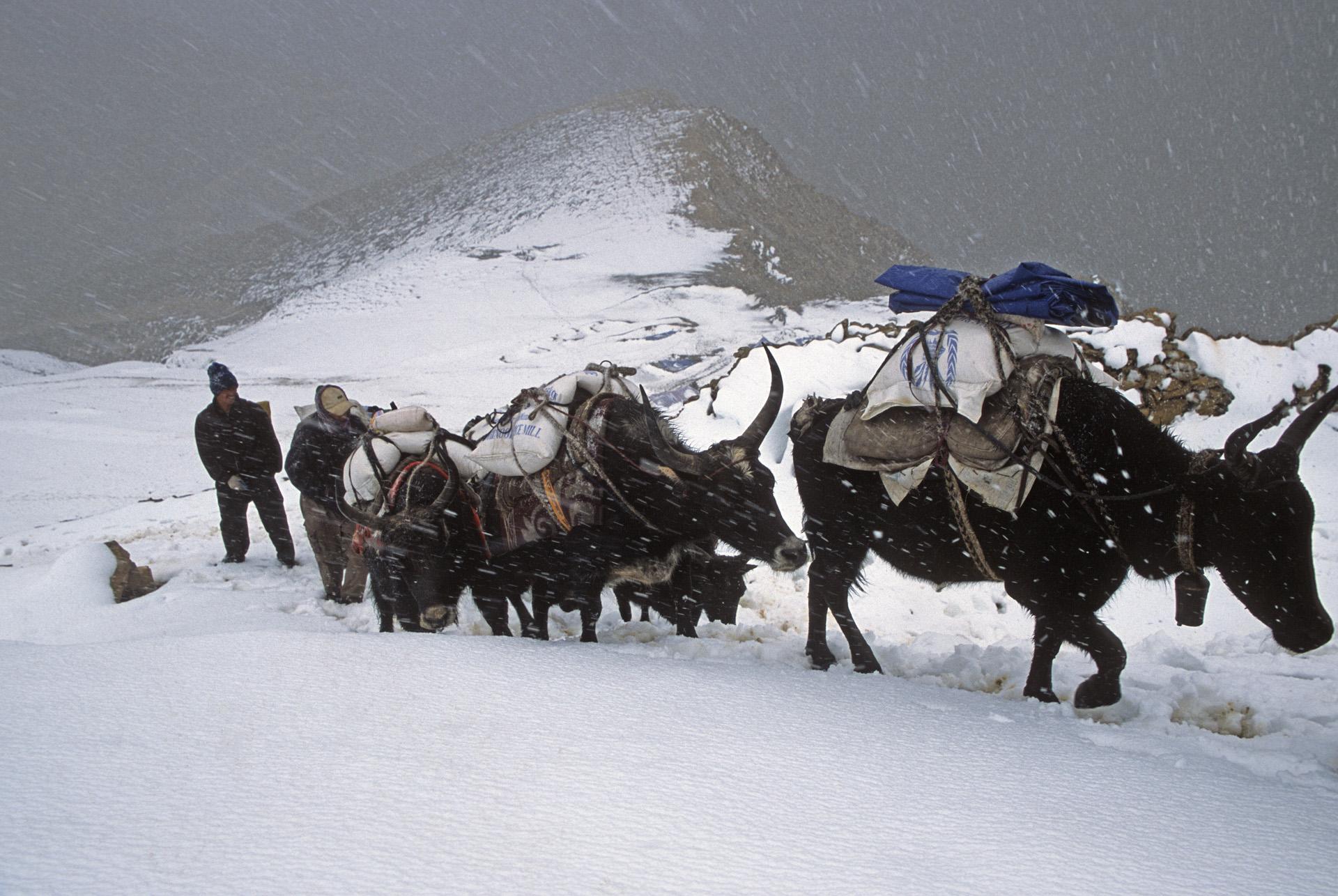 Nara La Pass 4,507m and the caravan of yaks returning from Tibet.