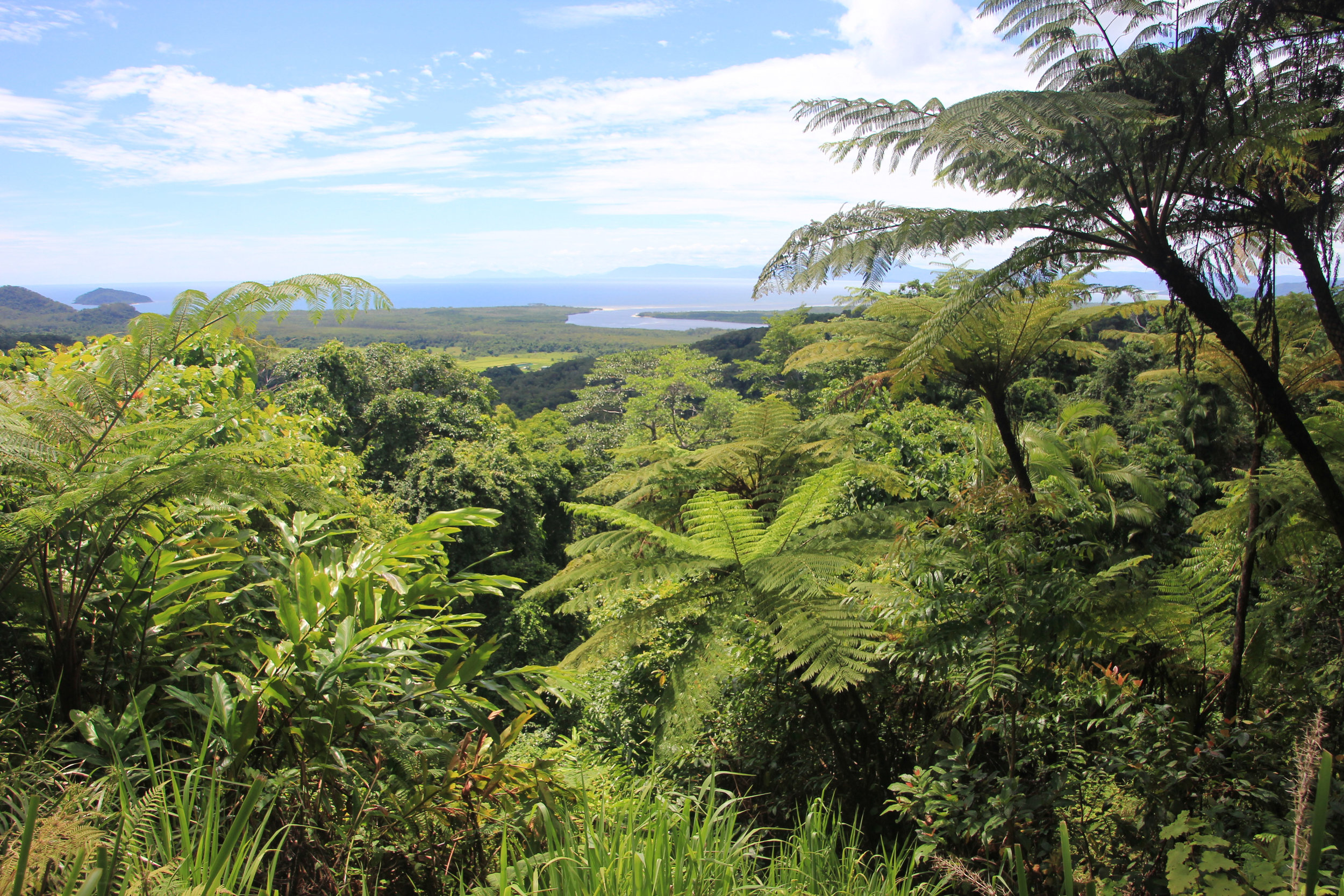 Daintree River and the tropical forest