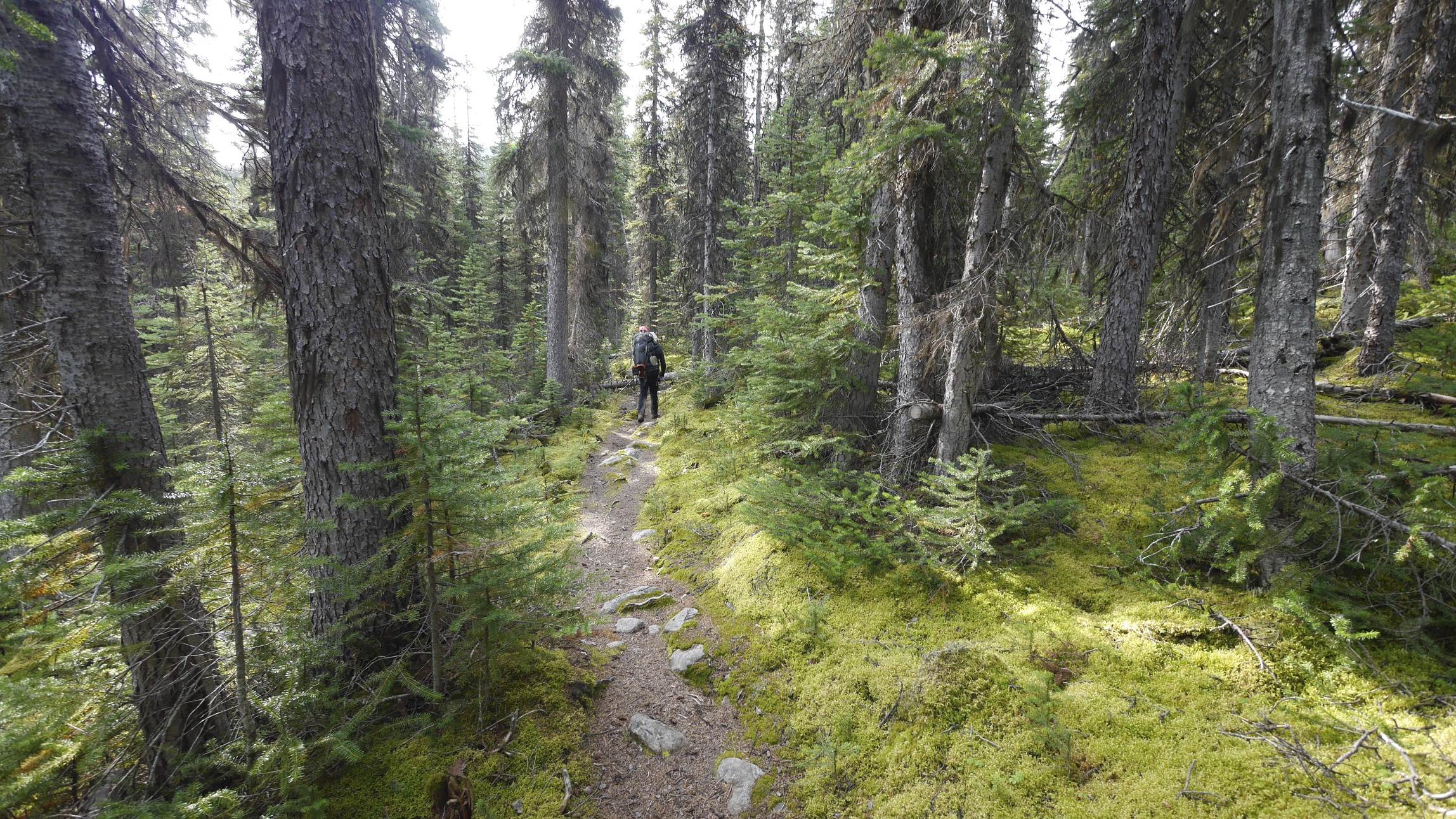 The trail in the Tonquin Valley