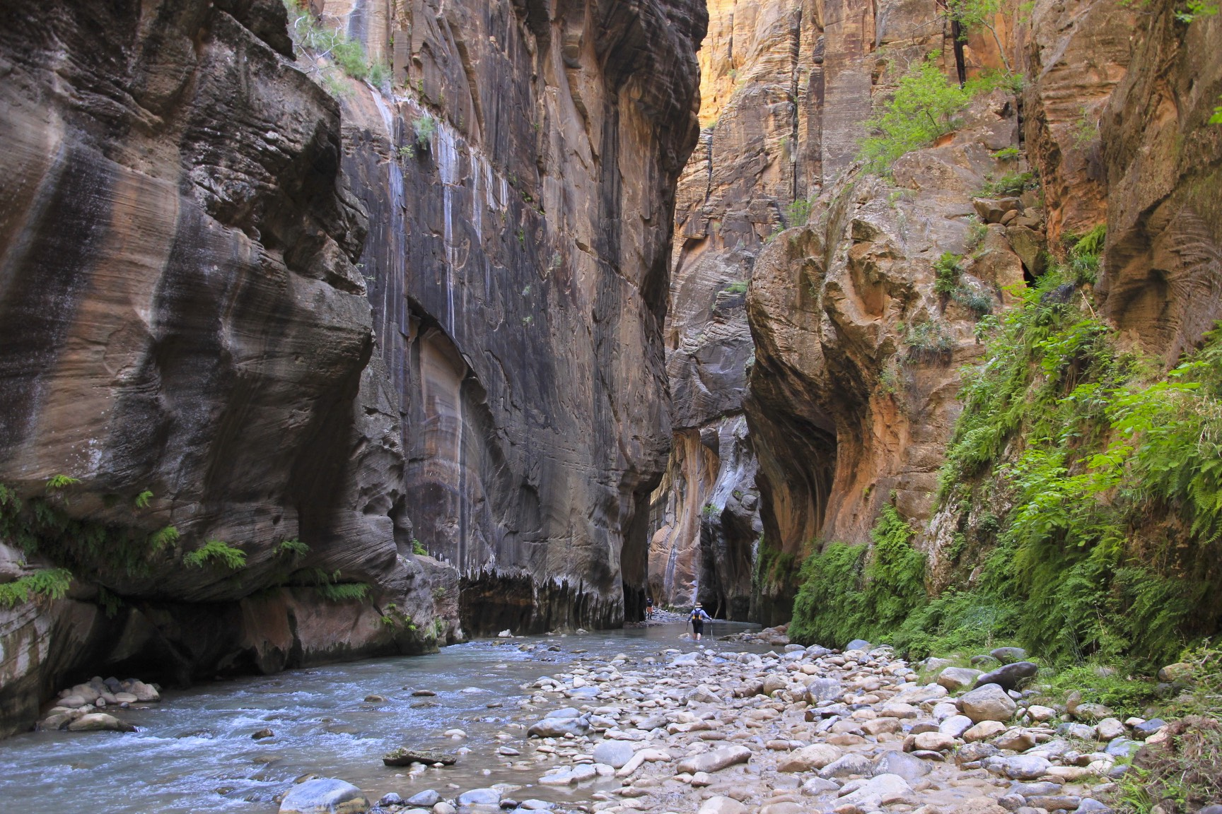 Hiking the Narrows of the Virgin River in the Zion NP