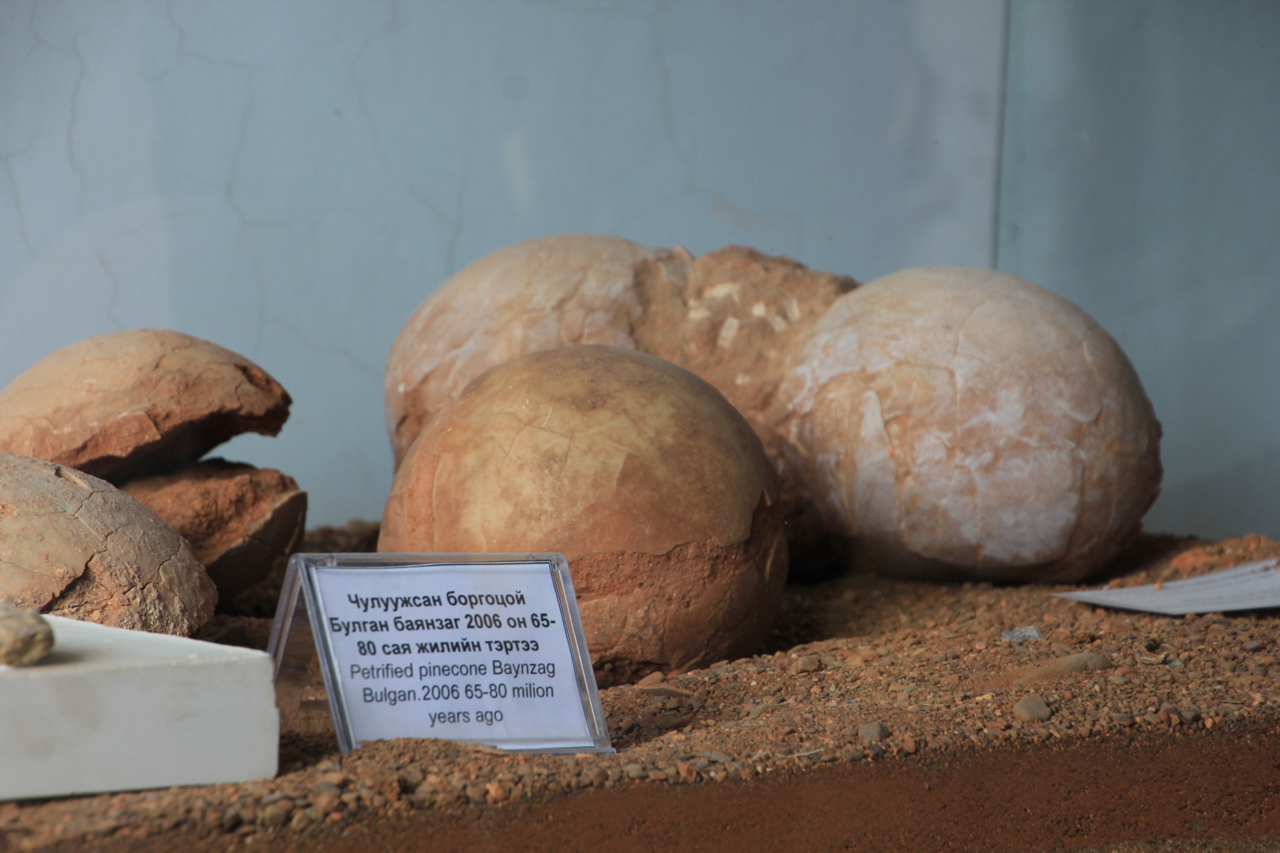 Petrified Dinosaur Eggs