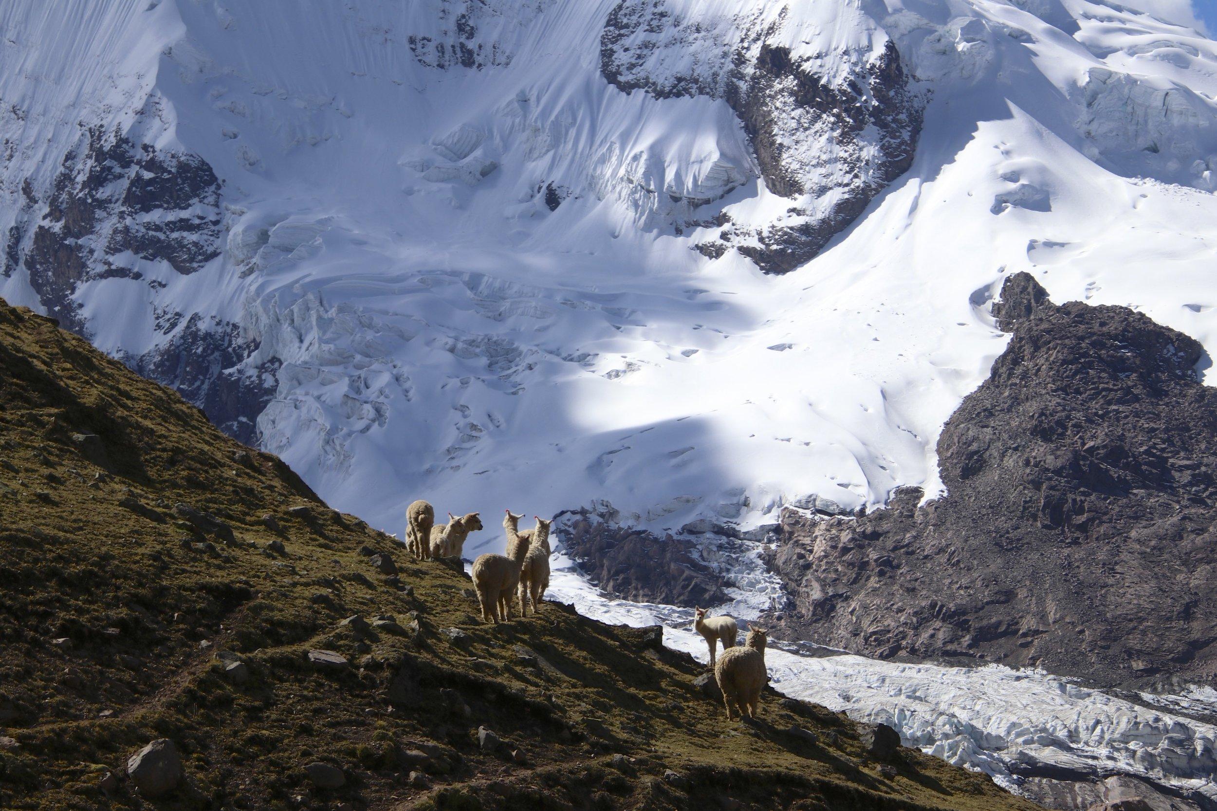 Alpaca and Ausangate
