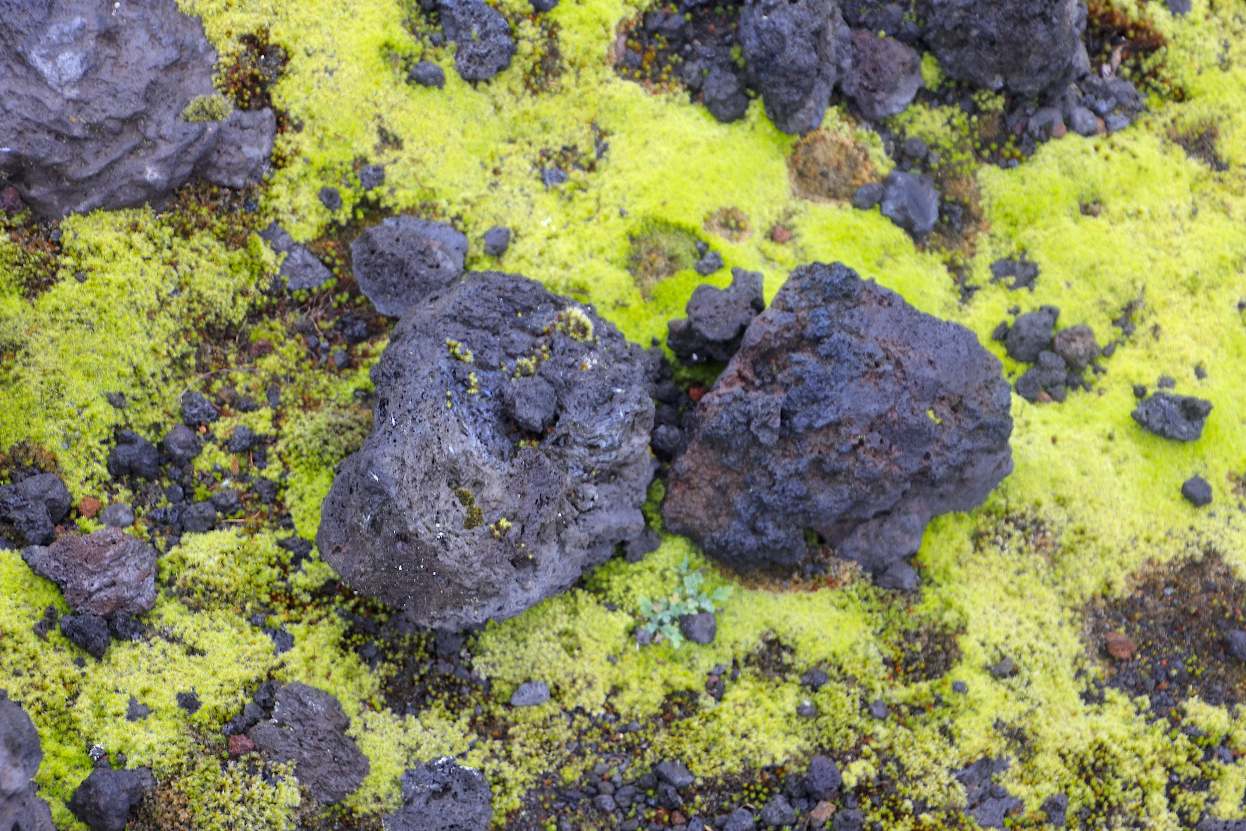 Lava rocks and moss.