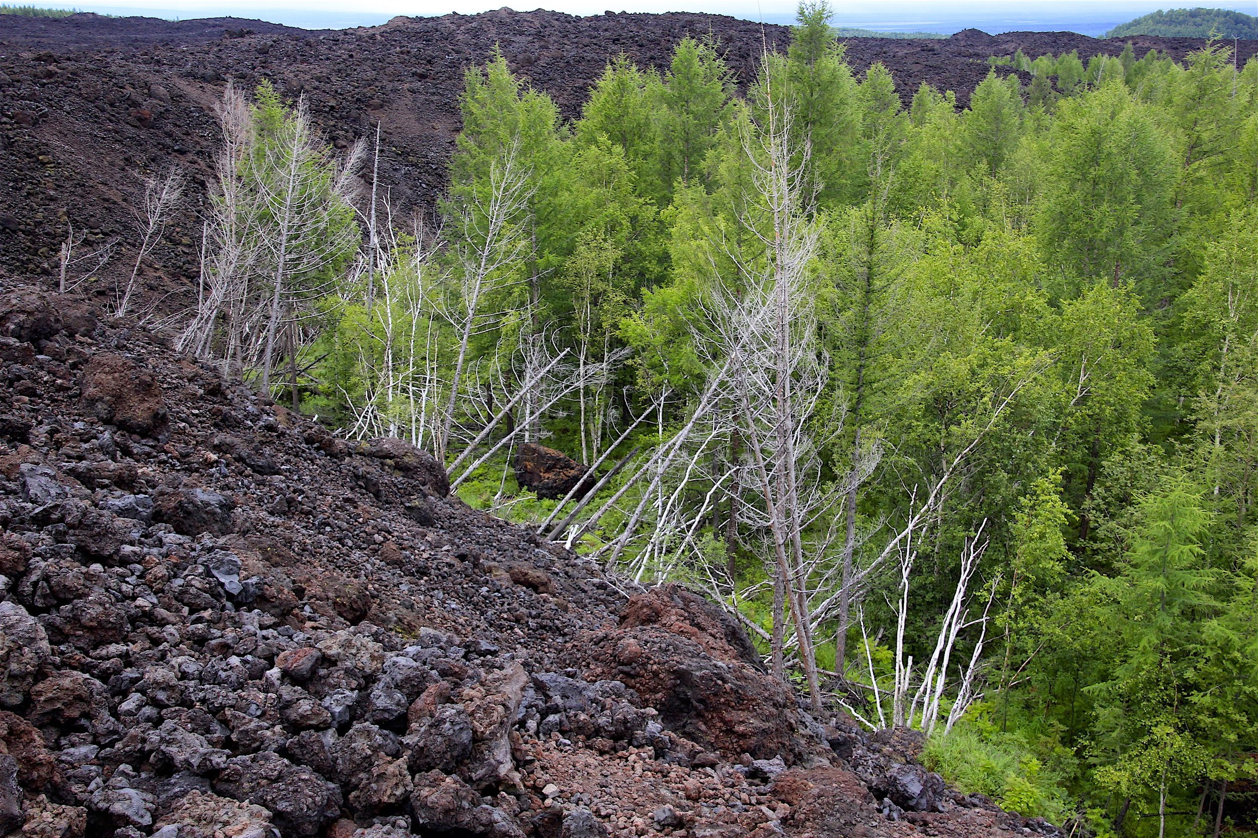 "The lava mowing down the forest just ""froze"" in its tracks. The eruption happened during winter and because of this, the forest did not burn down."