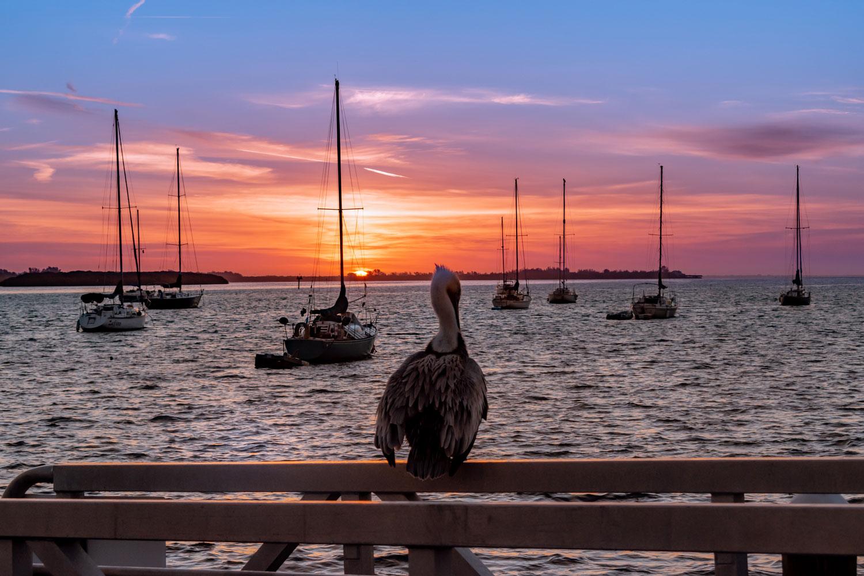 Sarasota-Bay-Pelican-Pier-Sunrise.jpg