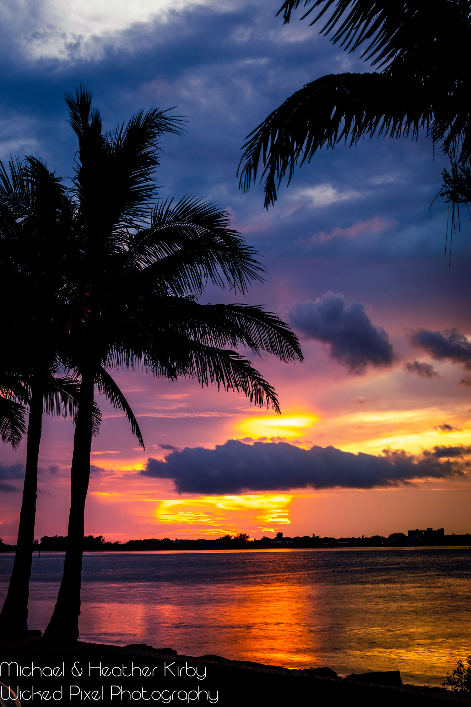 Sarasota-Bay-Palms-2.jpg