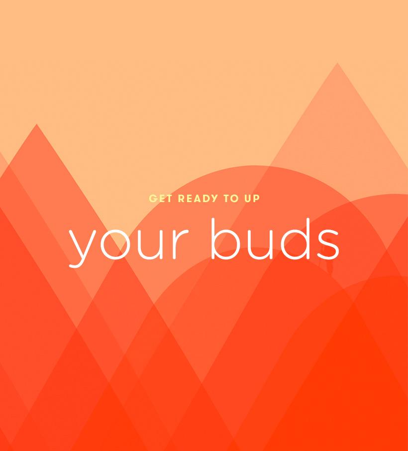 buds.jpg