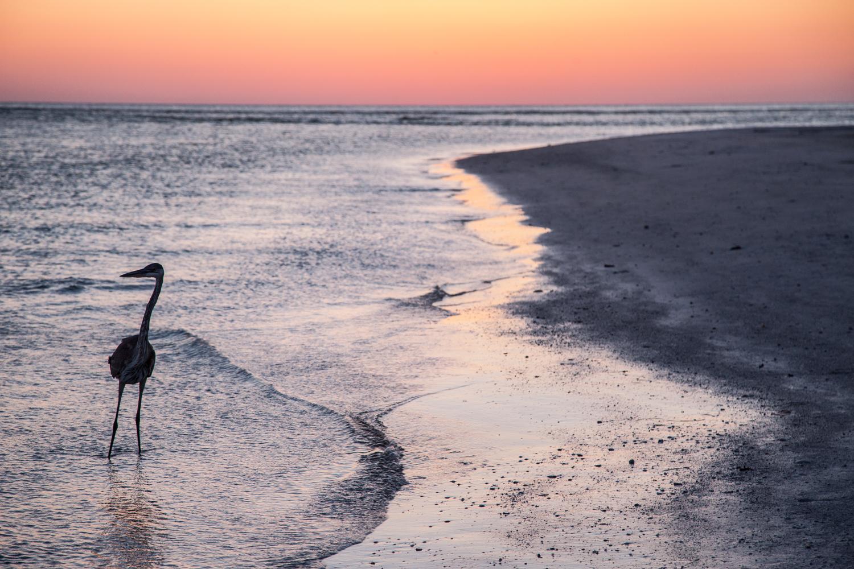 Birdlife on the beach.