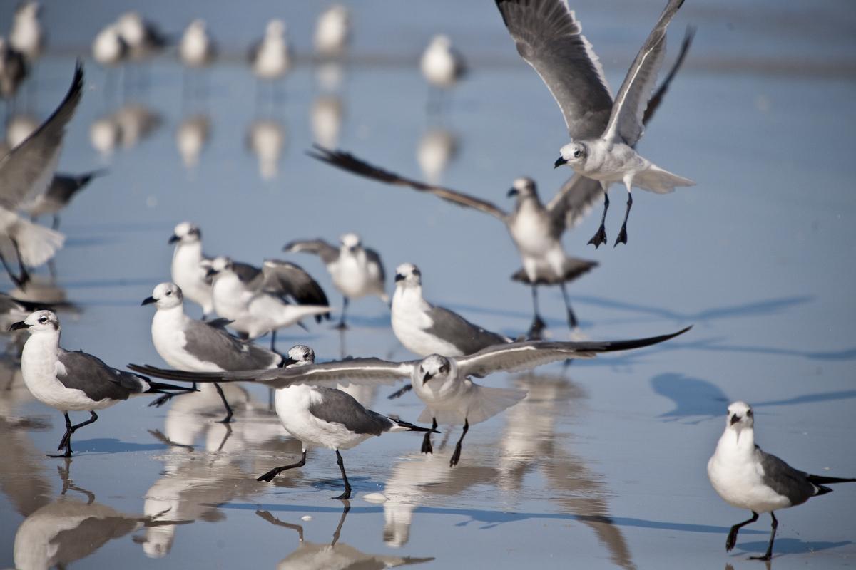 Lido birdwatching.