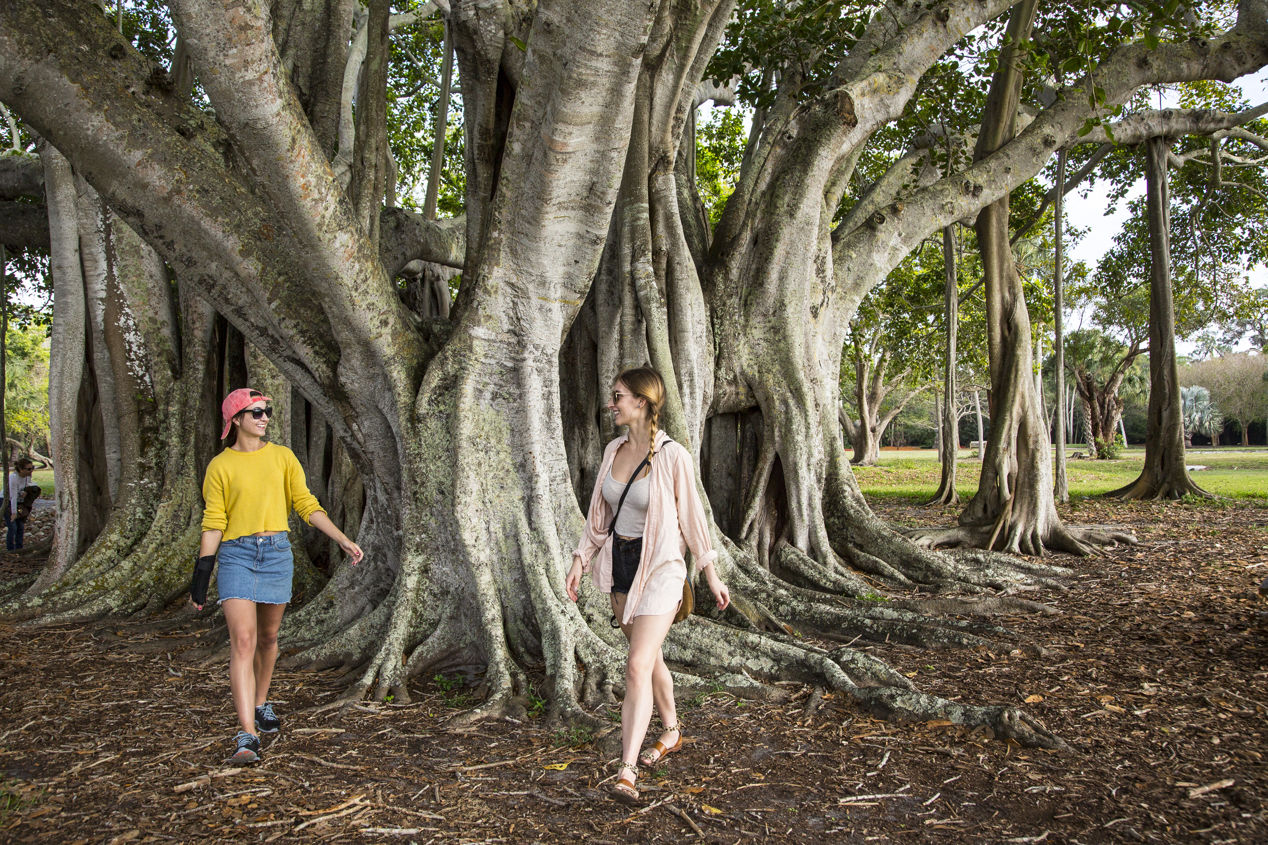 Girls enjoying the Banyan trees