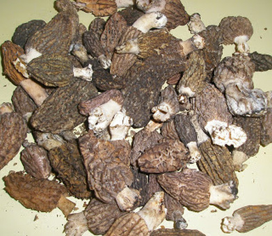 mushroommexico-2