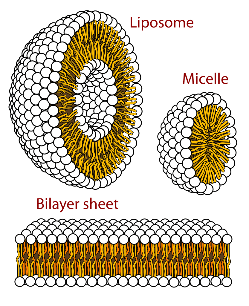 Liposome, Micelle, and Bilayer Sheet Graphics
