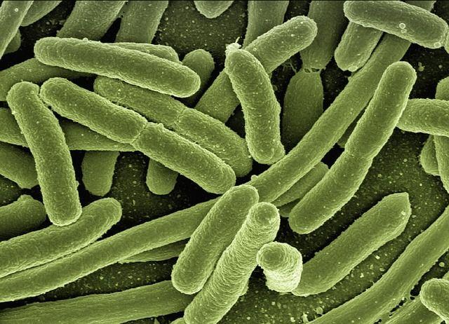Bacteria - C.jpg