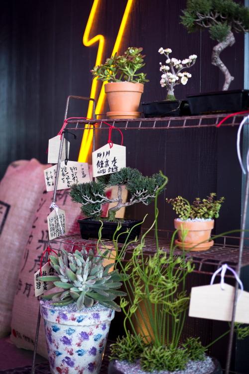 Daniel-san-Plants.jpg