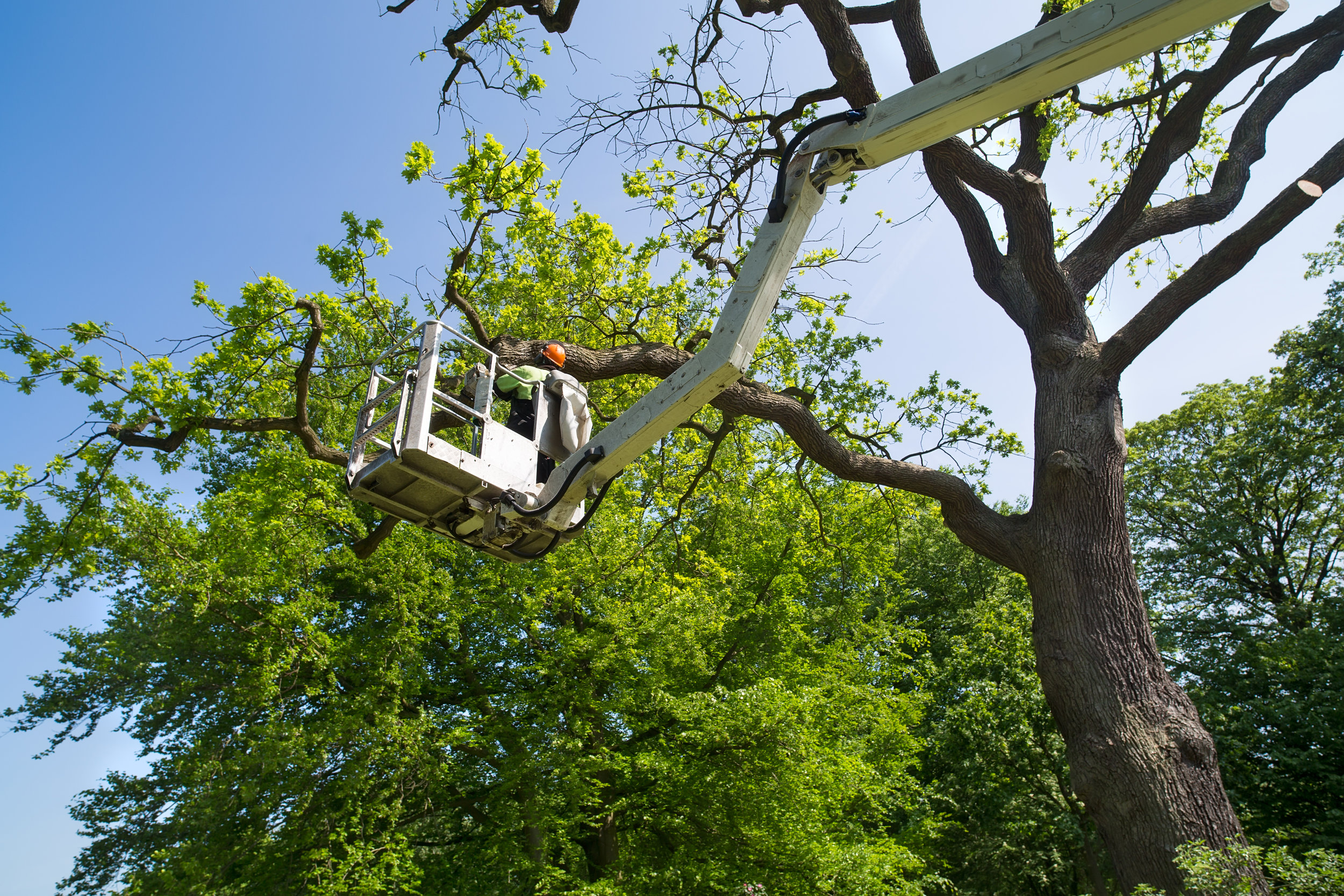 Our services include but are not limited to; - - Tree removal- Stump grinding- Tree trimming- Snow Removal- Planting