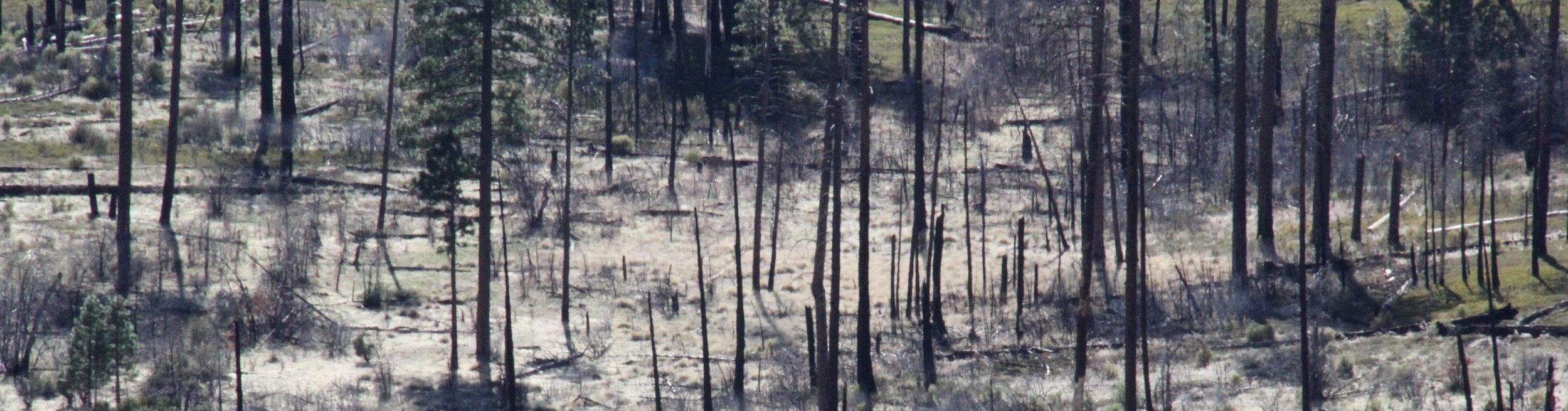 burnt_field.jpg