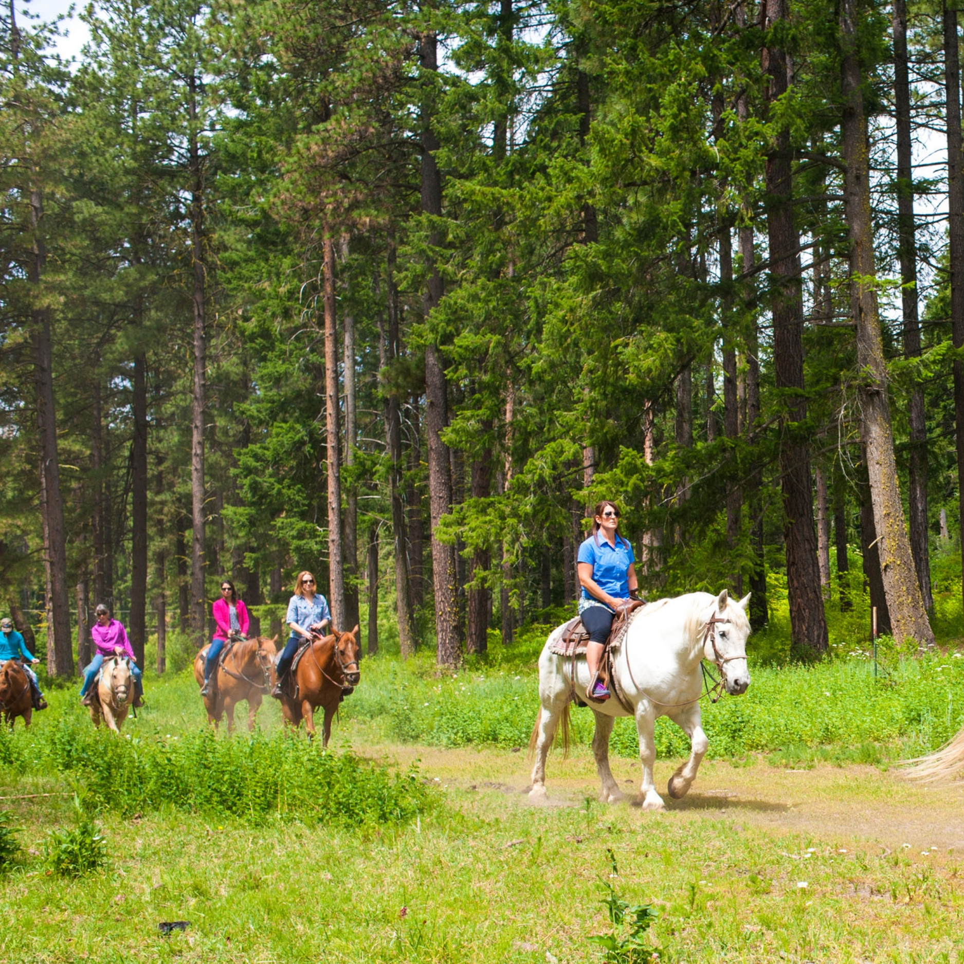 Group riding the 2 hour Alpine Meadow Ride with Wild At Heart Horse Rides
