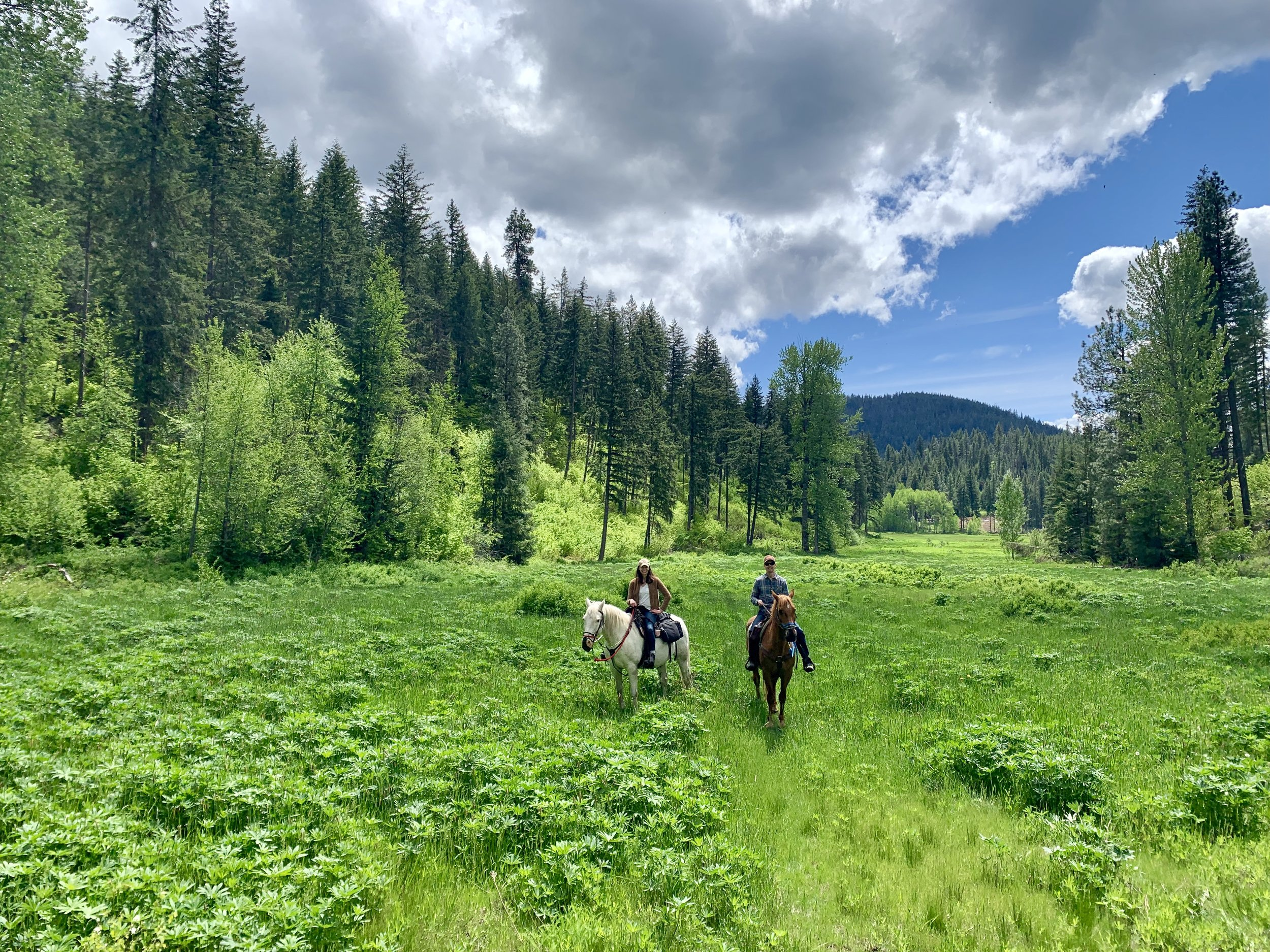 Private horseback rides with Wild at Heart Horse Rides