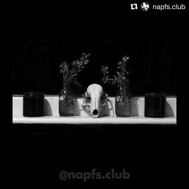 June 7, 2018 Digital Competition Results  Class 2, Honorable Mention – Skull'n'Flowers by Peter Livadas  #napfs2018c2mention #napfspeterlivadas #napfs2018competition #napfs201806competition #napfsphotocompetition #napfsmonthlymeeting #napfs #northaustinpfotographicsociety #photography #photoclub #centraltexasphoto #austin #atx #austintx #texas #photos #picture #photograph #pic #fotografia #instaphoto #camera #color #igtexas #photographylovers #photographyeveryday