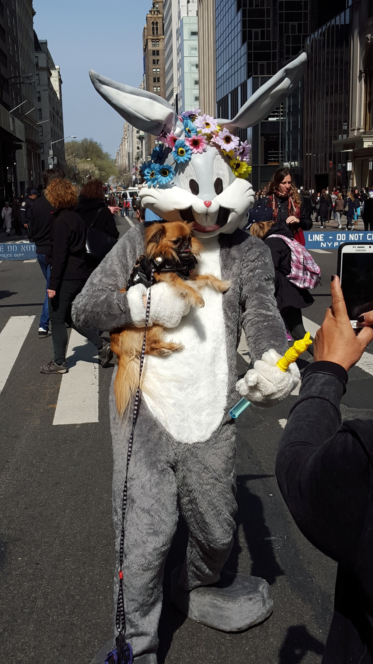 Bugs at Easter with dog