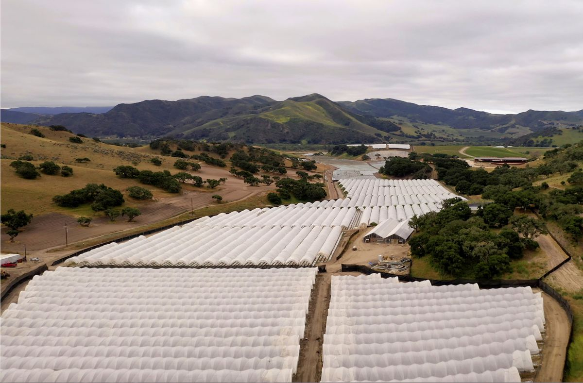 The hills of Santa Barbara County's famed wine region have become the unlikely capital of California's legal pot market. Now, rolling vineyards and country estates find themselves next to sprawling rows of white plastic hoop houses. (Brian van der Brug / Los Angeles Times)