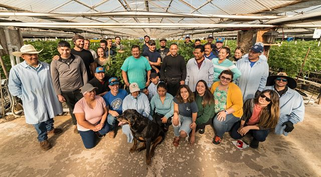 Hey team! Here are a few of the lovely faces from our cultivation, logistics, harvest, sales, and sourcing team. At Headwaters, our people are our most important asset.⁠ ⁠ #FollowtheHeadwaters