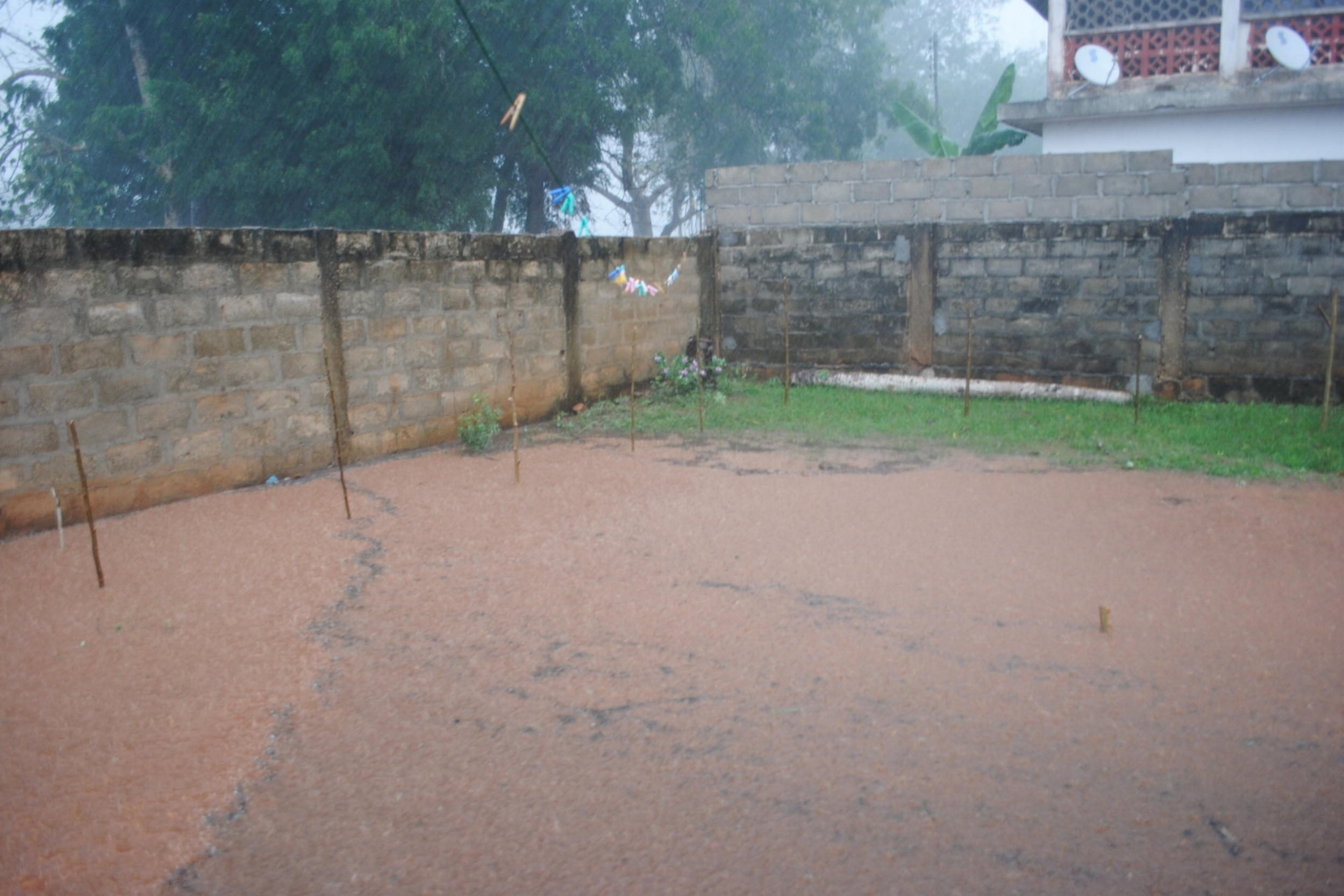 Nothing like a Ghana thunderstorm. Look at how tiny the Moringa trees are!
