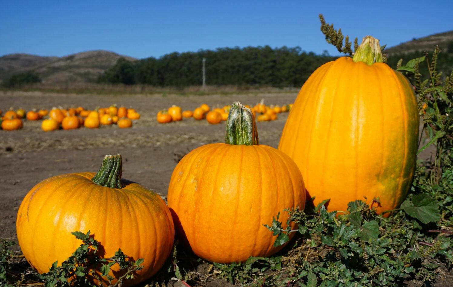 three pumpkins.jpg