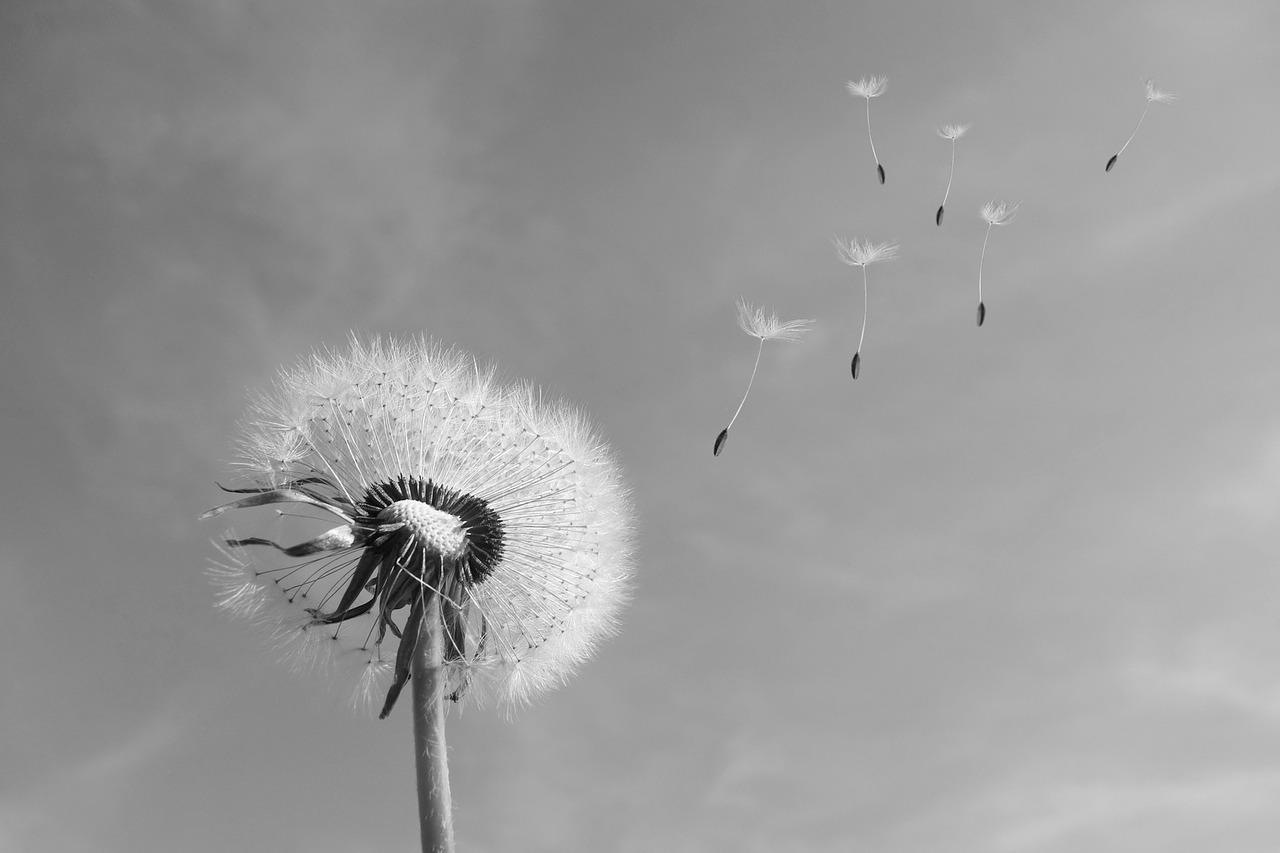 WENIGER UND MEHR, OHNE PATENTREZEPTE - Jeder Mensch ist außergewöhnlich. Deshalb ist jede Veränderung etwas Besonderes und so speziell, dass dafür ein individuelles Vorgehen gefunden werden sollte.Es ist immer Ihre persönliche und freie Wahl, wovon es zukünftig weniger und wovon es mehr in Ihrem Leben geben soll.