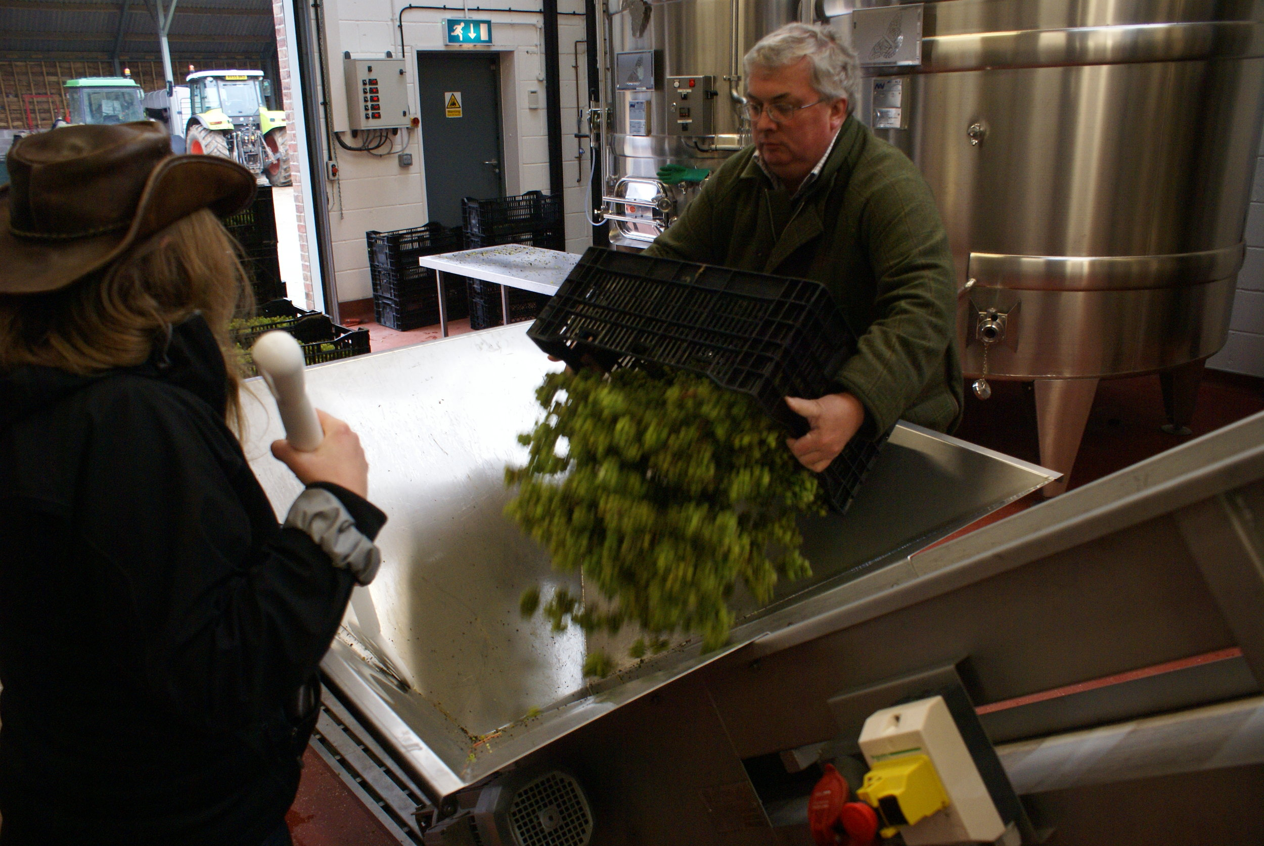 2. Loading the Press - Grapes are gently loaded into the press viaa conveyor belt and sorted for quality.