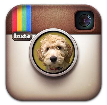 instagram-icon_MG_v2.jpg