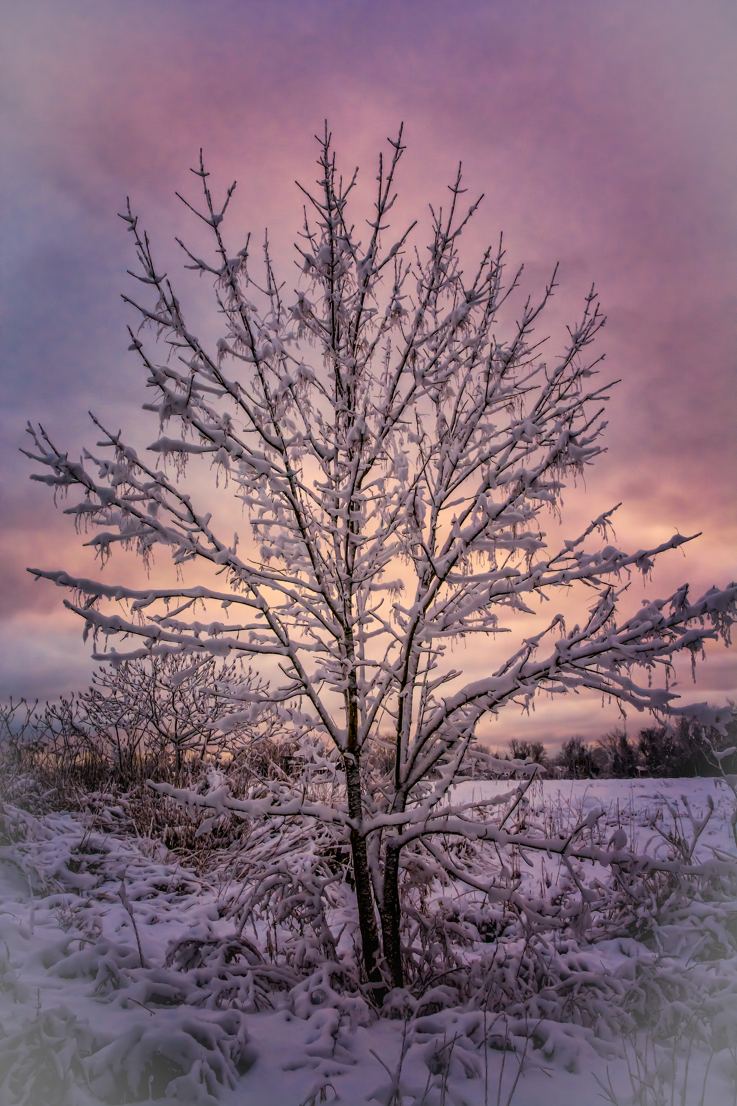 Winter's Dawn - Nikon D7100, 1/200 @ f/8, ISO 800, 22mm - See the poem, Winter's Dawn in the Poetry Section!