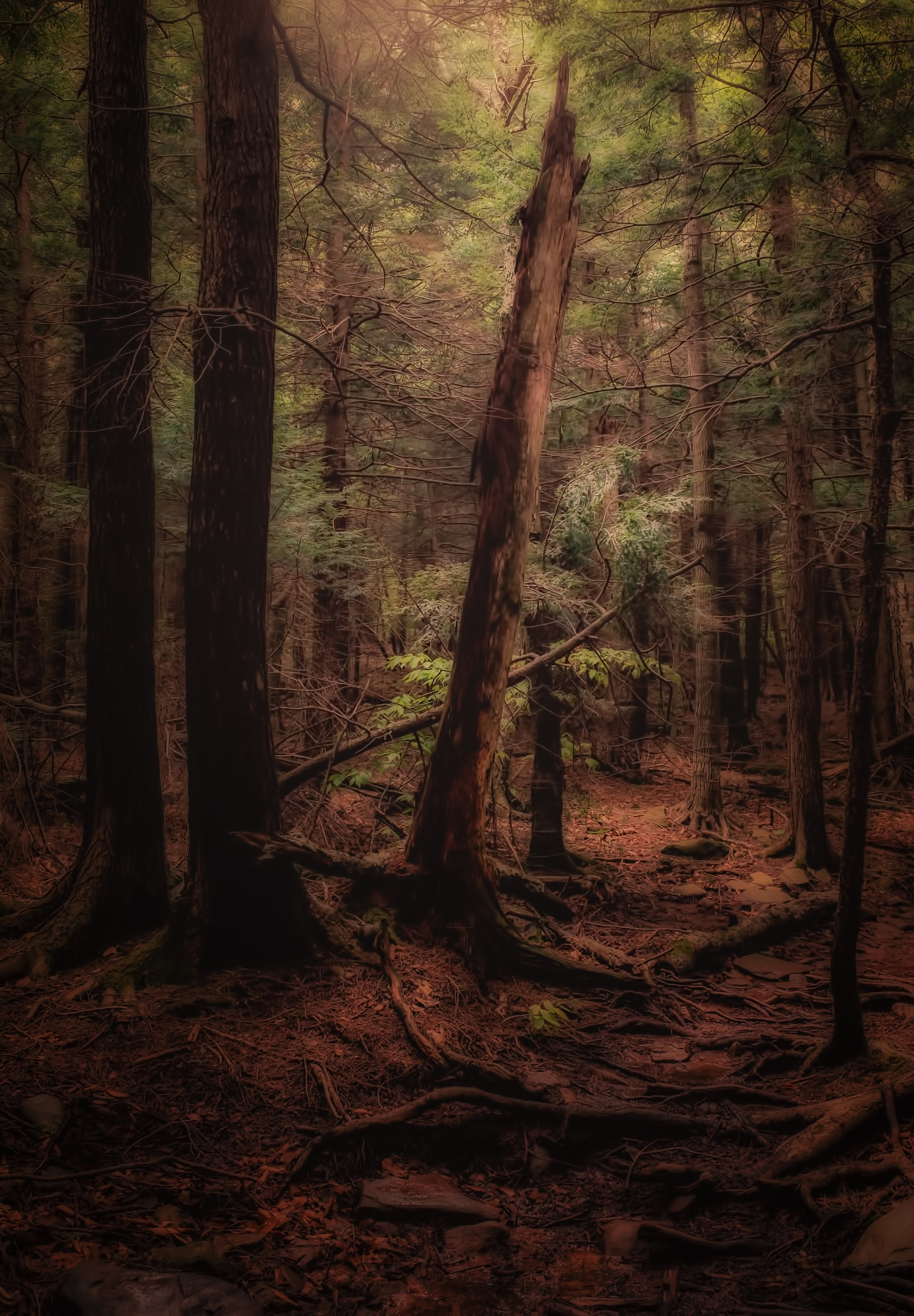 The Deep Woods - Fuji X100T, 1/60 @ f/5.6, ISO 640, 23mm - I used the Duplex preset in Nix Color Effects, one of my favorites, to produce this forbidding image.