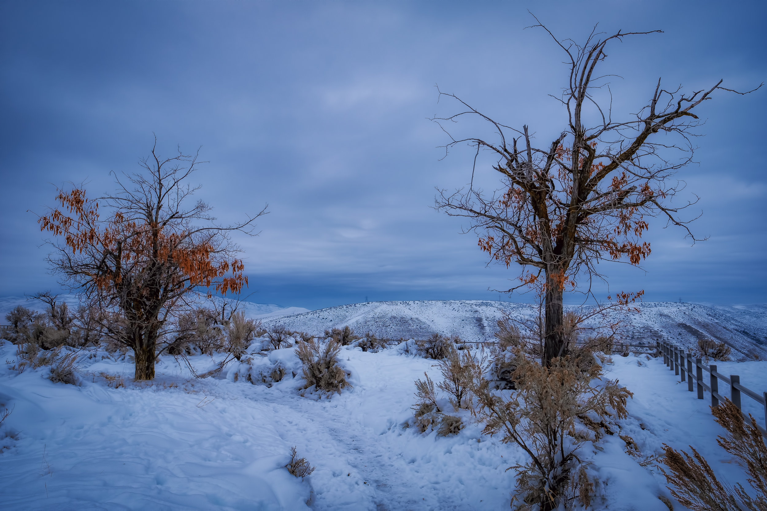 Two Trees in Winter - Fujifilm X-T3, 1/320 @ f/11, ISO160, 16mm. This shot was taken from a point overlooking the Treasure Valley, the location of Boise, Idaho.