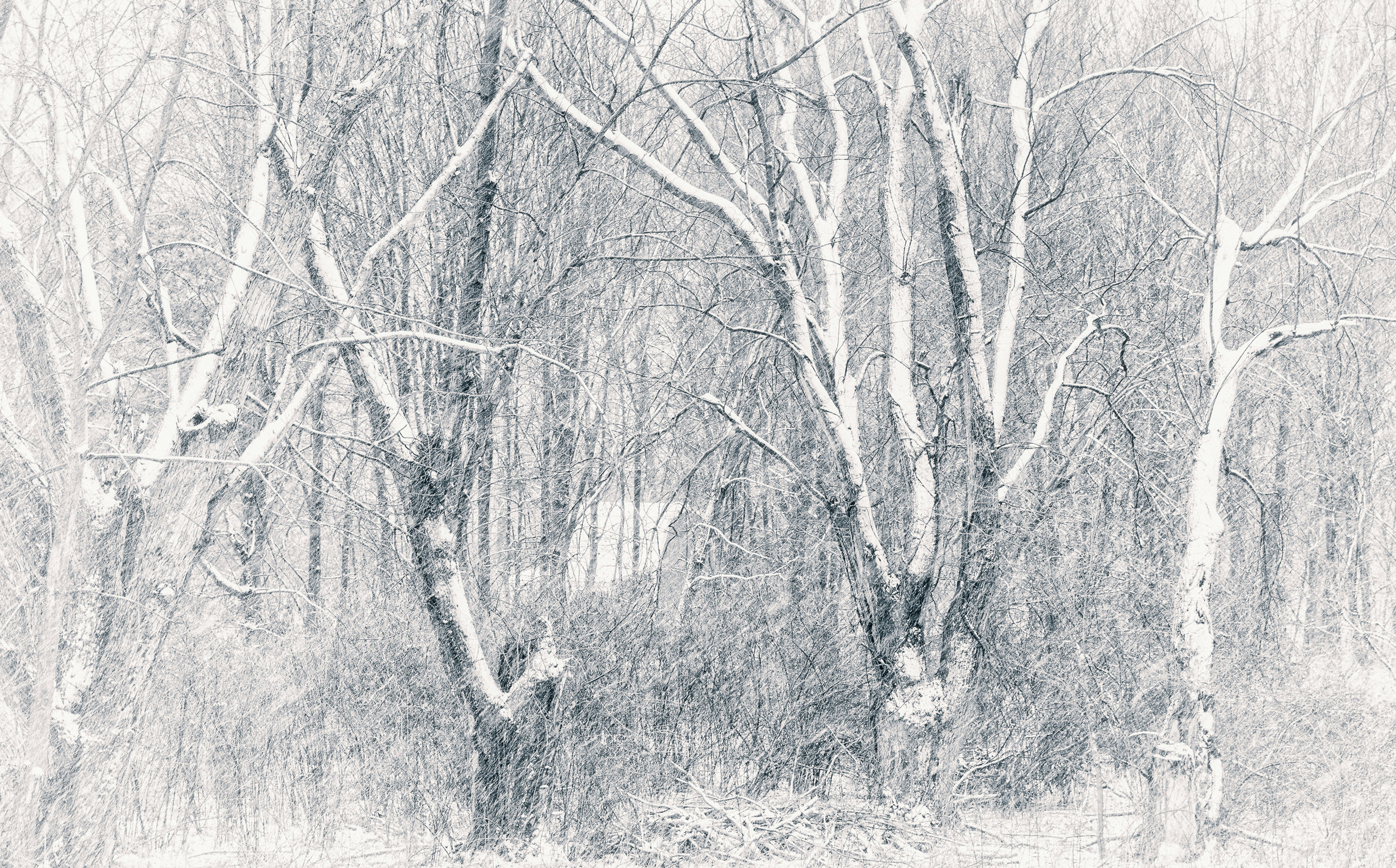 Snow in the Trees - Nikon D750, 1/50 @ f/8.0, ISO320, 98mm. Processed with a high-key tone in Topaz Silver Efex Pro. See the poem of the same title in the Poetry Section.