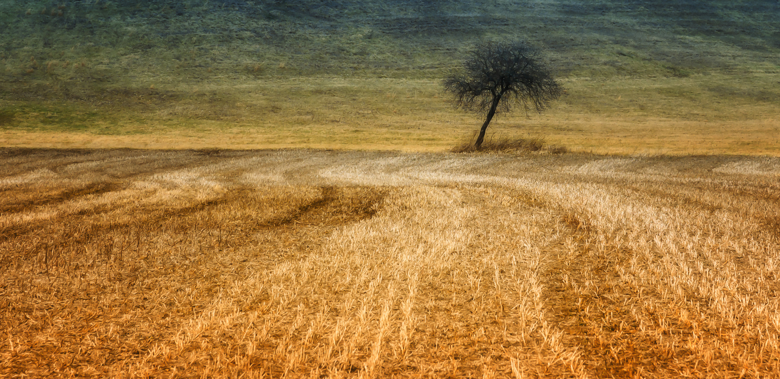 Field in March - Nikon D750, 1/320 @ f/10, ISO100, 120mm. Added a texture and bi-color filter in post to create a more compelling image. I have a thing for lone trees. This photo is one of my personal favorites.