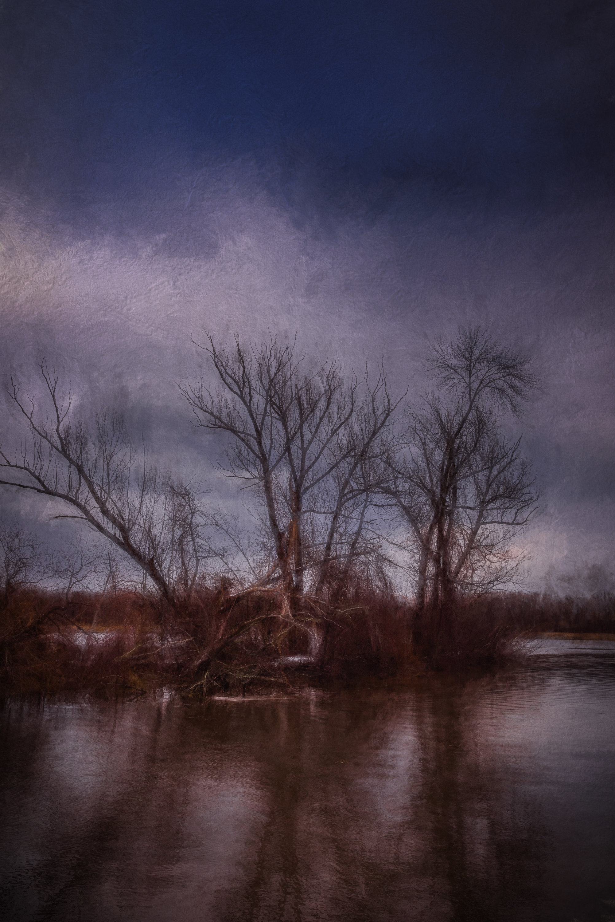 Trees by the River.jpg