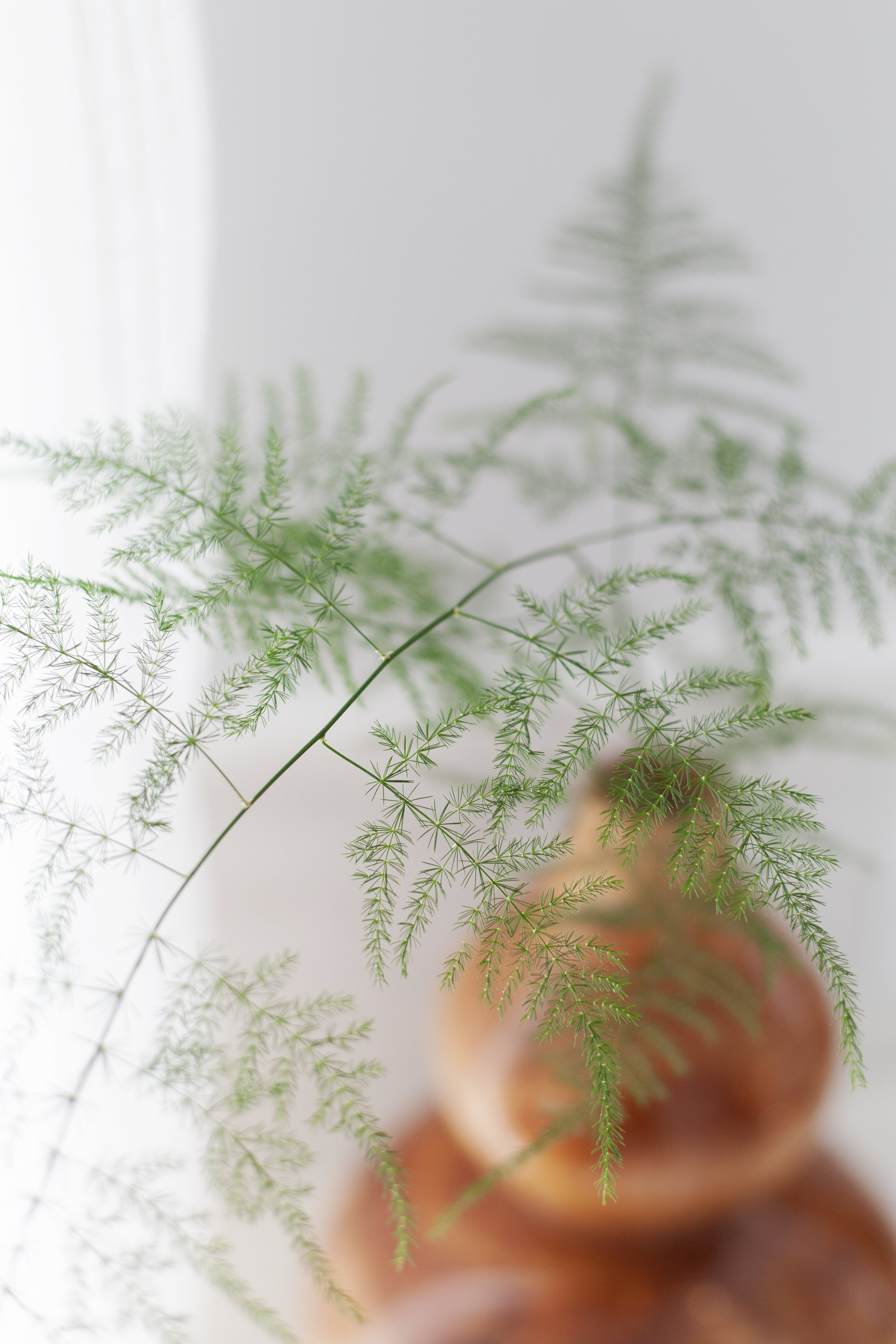scout-and-nimble-go-to-greenery-plumosa-vase.jpg