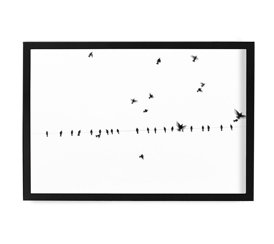Fly by II by Ryan Garvin