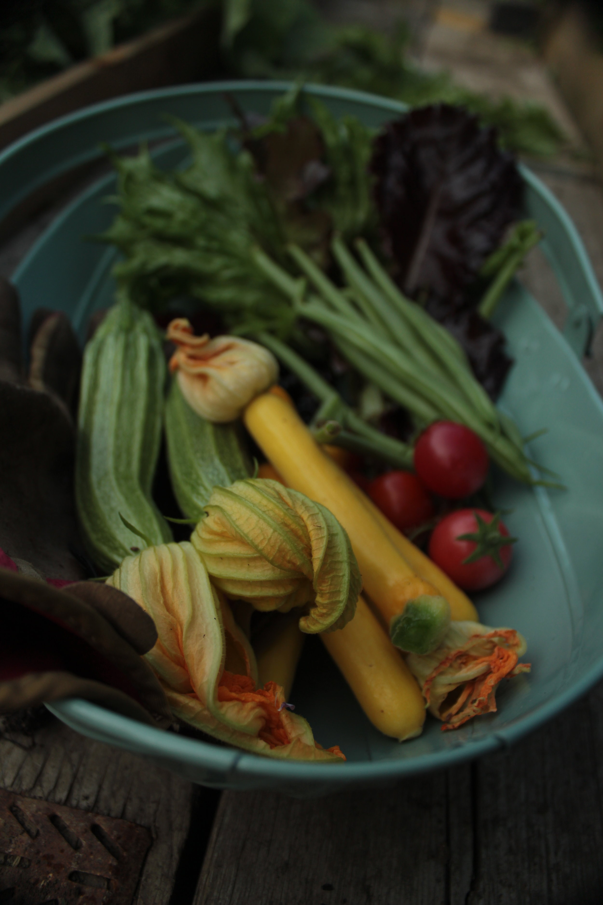 Fruit, Veg and Foraging