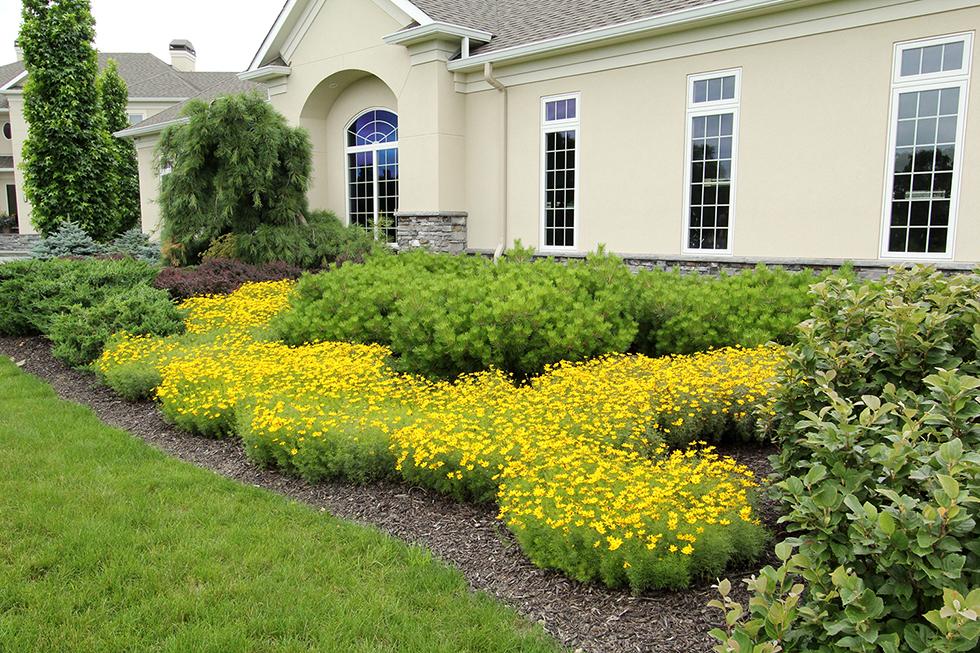 Landscape Plantings -