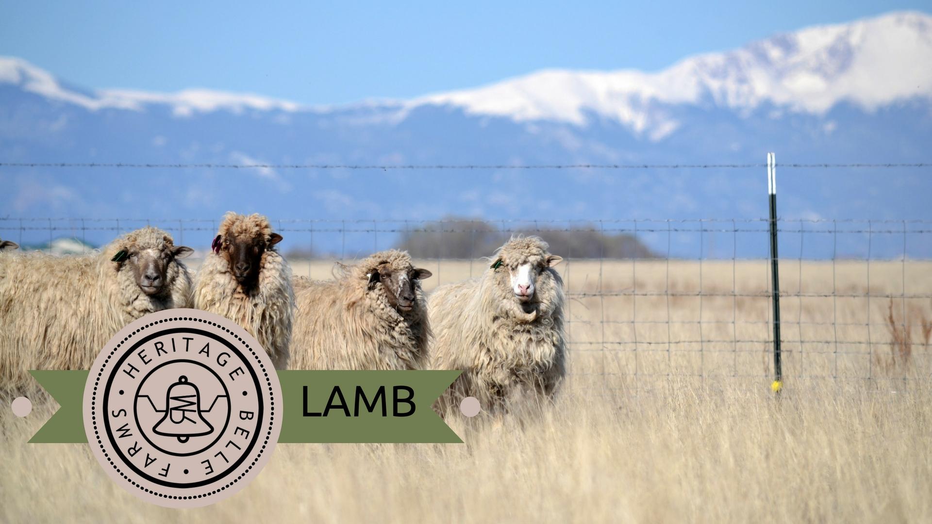 HBF Web lamb.jpg