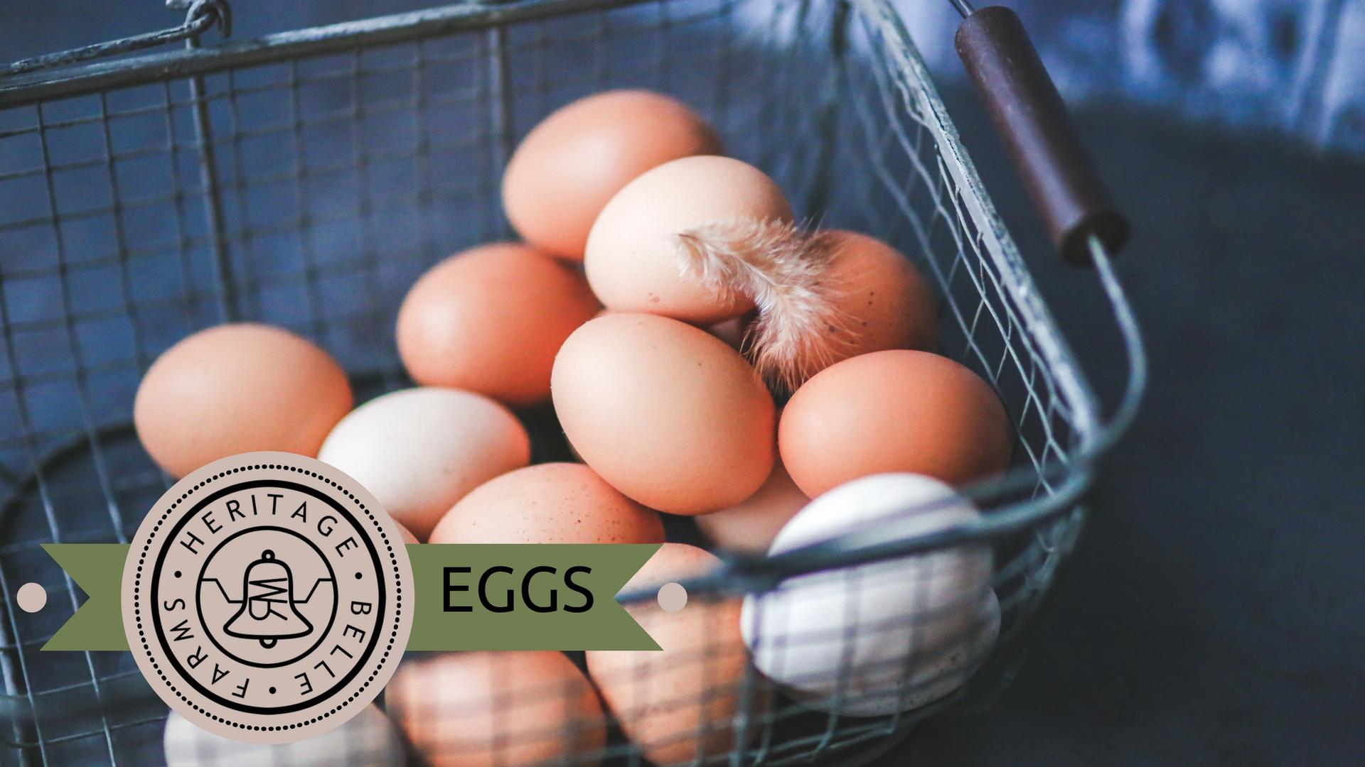 HBF Web eggs.jpg