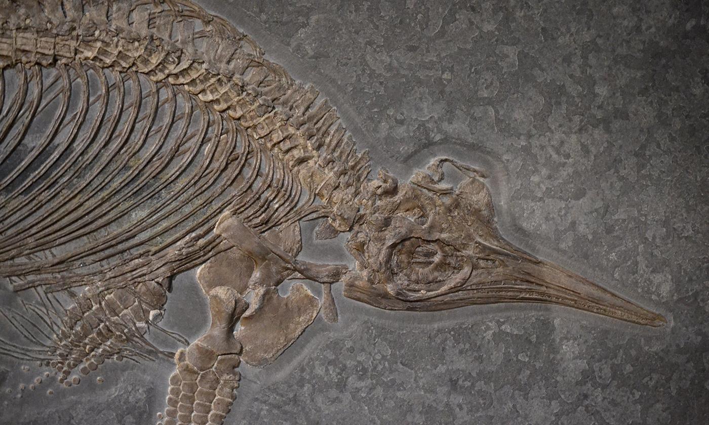 idea_sized-stenopterygius_fossil.jpg