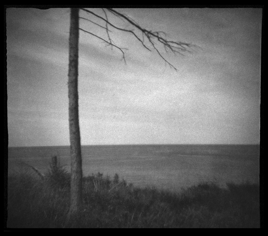 Malpeque Ridge Trees #12