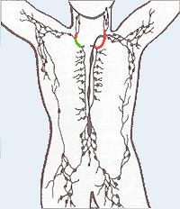 Lymphatic_system2.png
