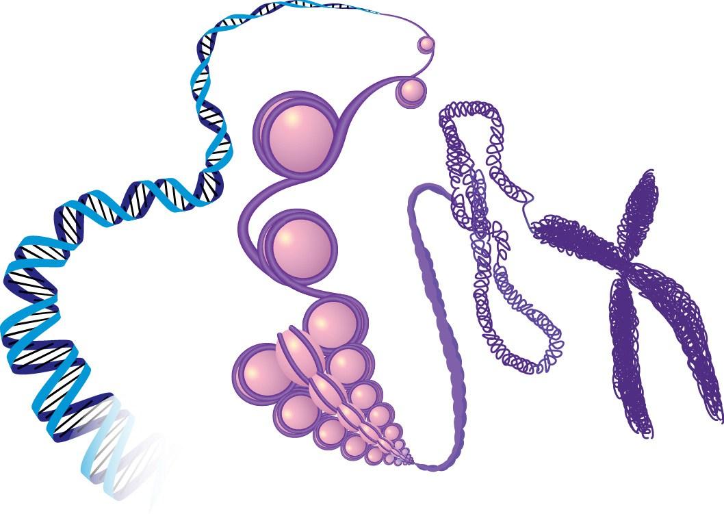 https://sciencelife.uchospitals.edu/2015/06/04/new-tool-brings-standards-to-epigenetic-studies/