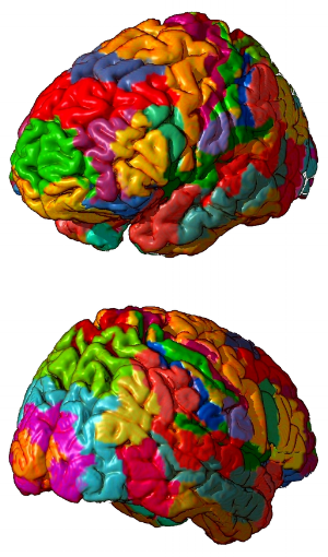 By Mark Dow. Research Assistant Brain Development Lab, University of Oregon. [Public domain], via Wikimedia Commons