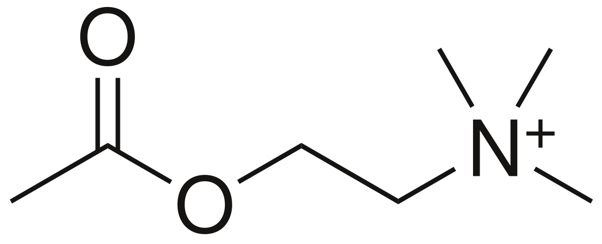 Acetylcholine, the substrate of acetylcholinesterase.